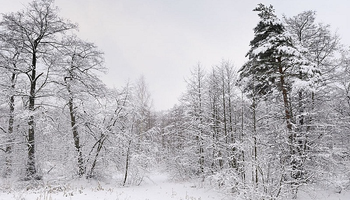 russian_winter_woods