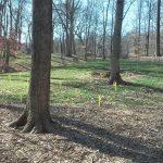Field Trip to Spring Grove