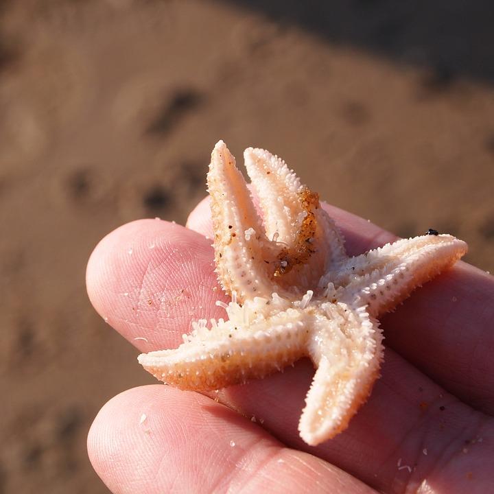 starfish-pixabay
