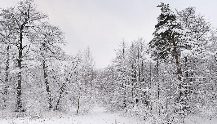 russian_winter_woods