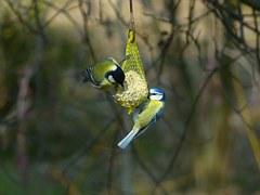 birdseed winter