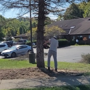 For Everything There Is a Season: Memorial Trees Taken Down